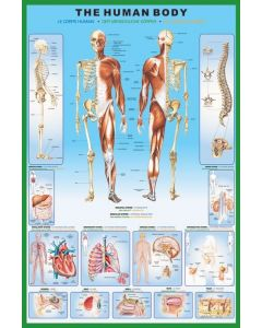 The Human Body - Poster