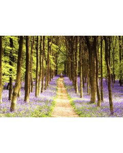 Woodland Path - Nature Poster